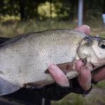 Fischerprüfung NRW 2019