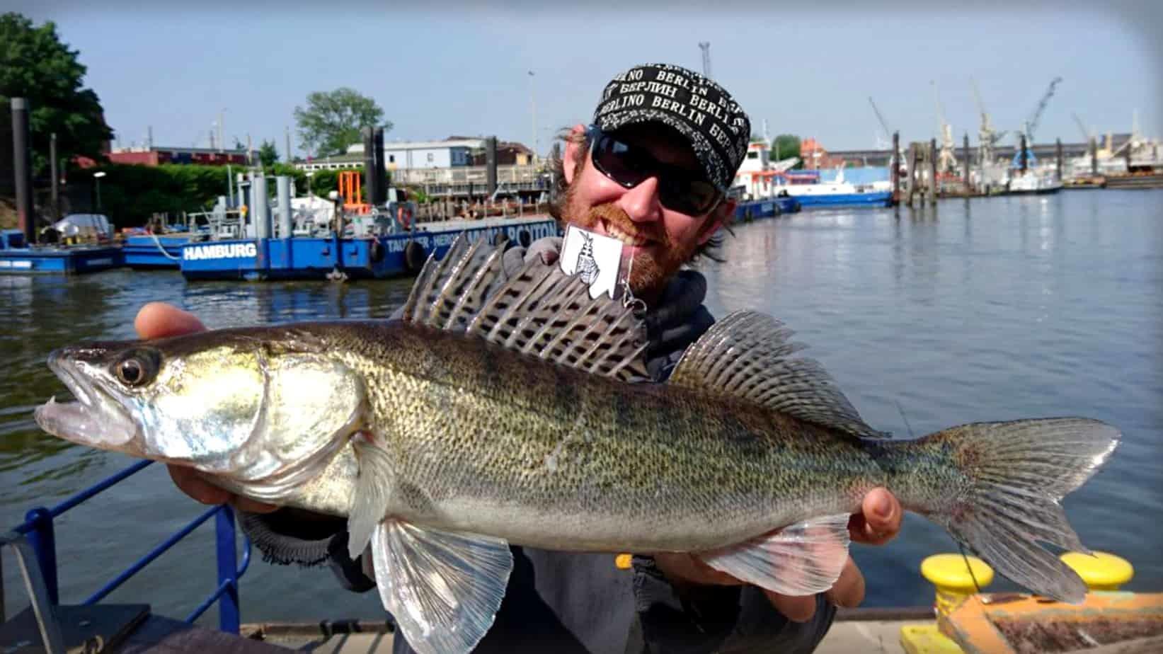 Hamburg Zander Fischereischein